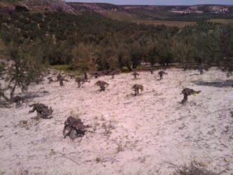 """""""Madrid Rutas del Vino"""", descubre y degusta la región de otra manera"""