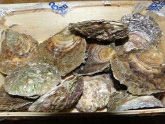 Cómo abrir unas ostras