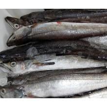En está práctica de la pesquería de bajura se permite únicamente la utilización de artes de pesca artesanales.